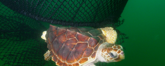 Saving-Sea-Turtles-from-Shrimp-Trawlers