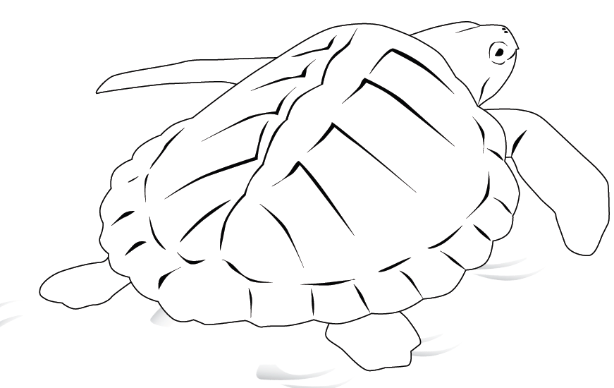 galapagos coloring pages - photo#27
