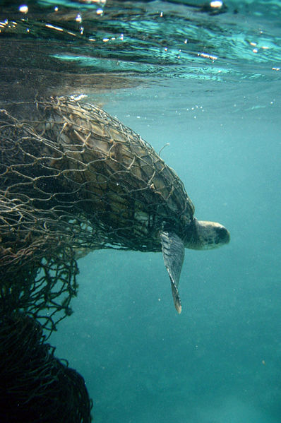 New Toll Free Information Line Established to Protect Sea Turtles