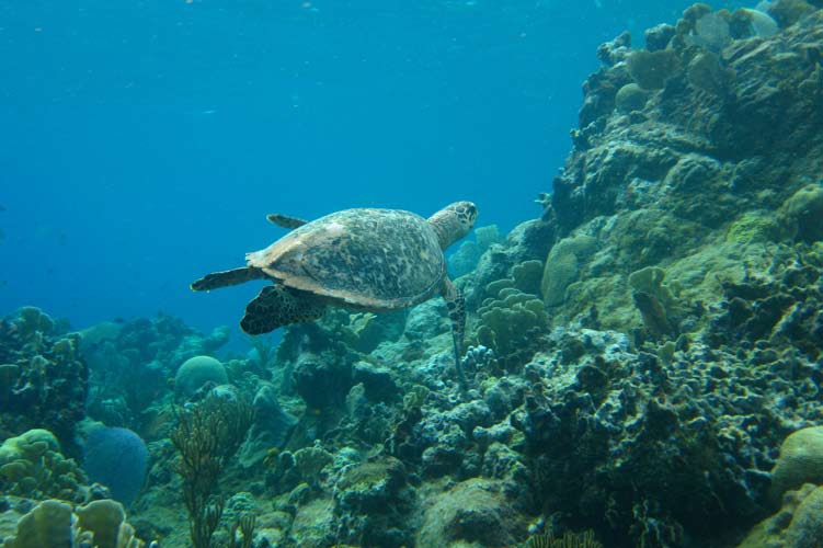 UN Panel of Experts Urges Closing Fisheries to Save Sea Turtles