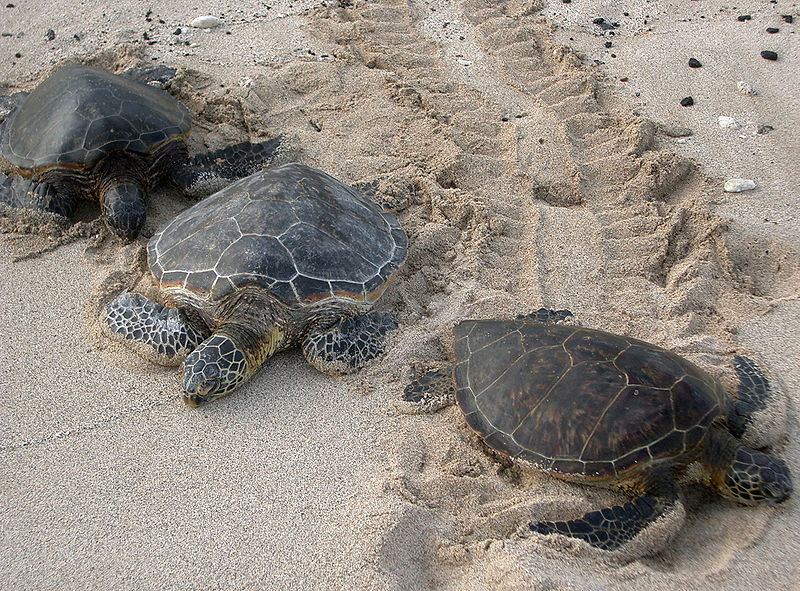 New Report: Saving Sea Turtles is Good for the Economy