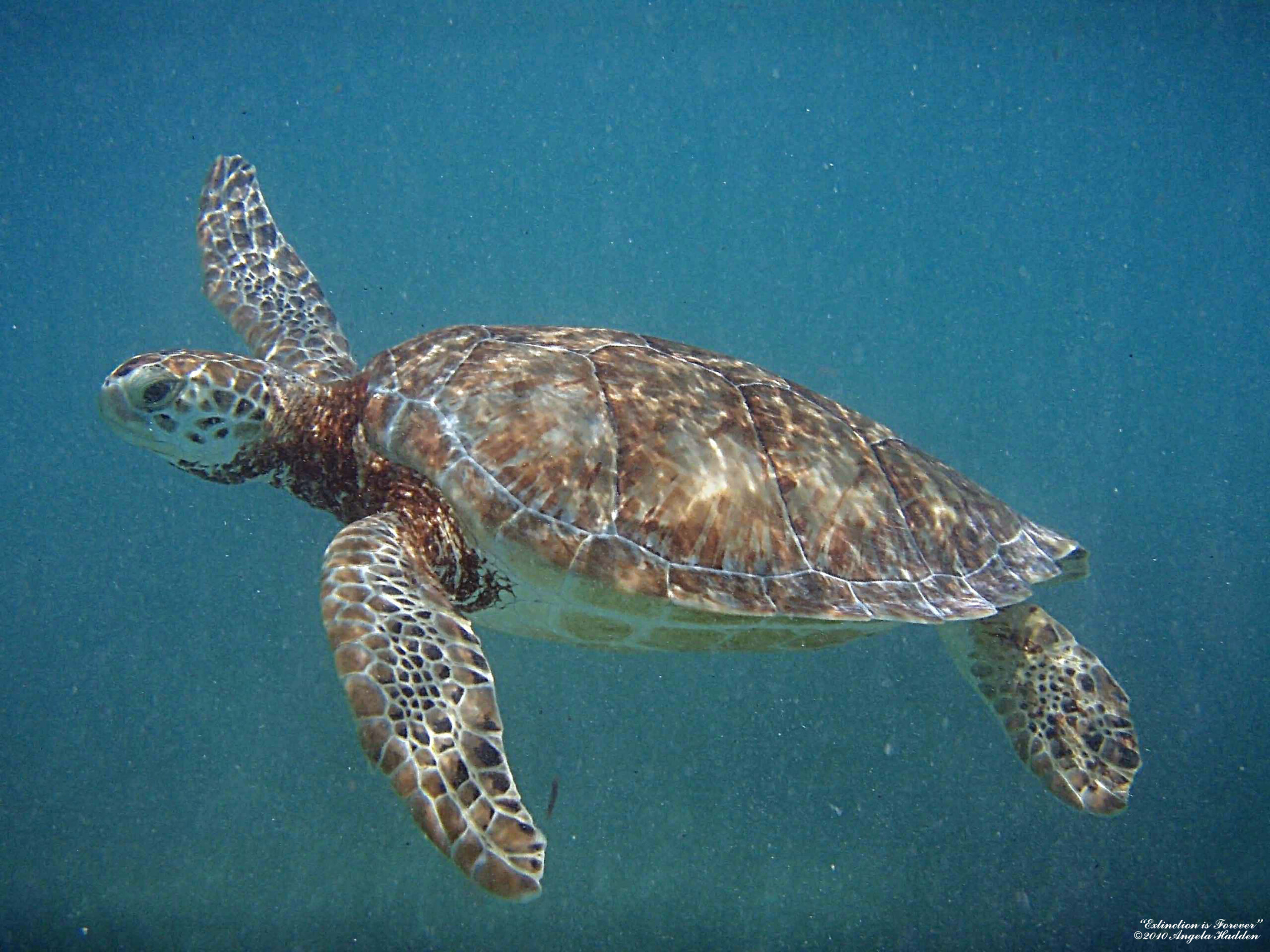 Texans Speak Out for a Marine Reserve!