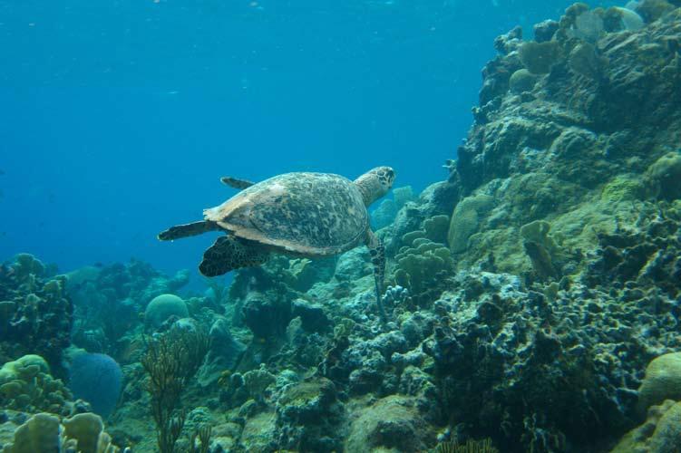 Sea Turtle Saturday in Texas