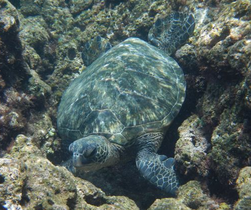 International Sea Turtle Swimway Proposed in Gulf of Mexico