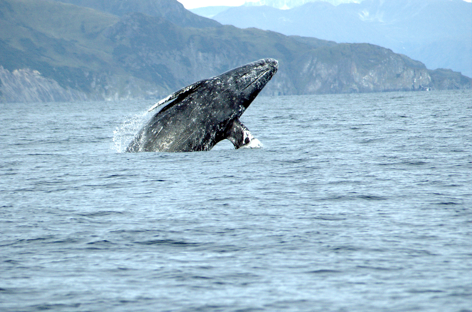 Endangered Whales and Sea Turtles off California and Oregon Remain Protected