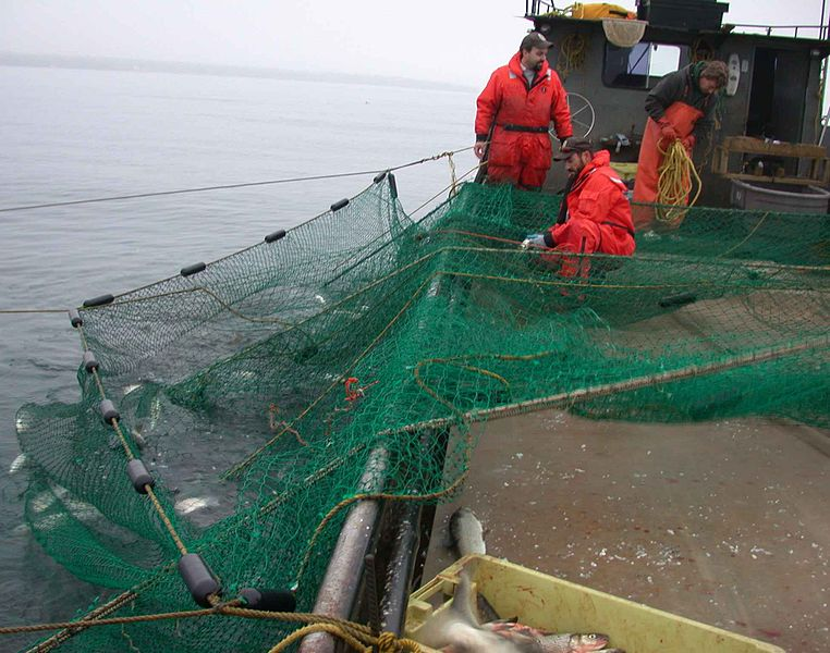 Endangered Sea Turtles Receive Vital Protections from Drift Gillnets