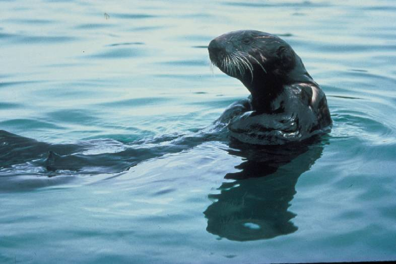 Lawsuit Seeks Better Management of Marine Mammals Threatened By Global Warming