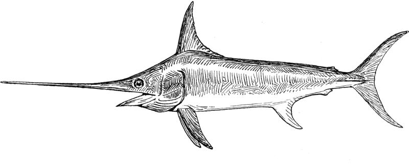 Conservation Groups Seek Ban on Imported Swordfish