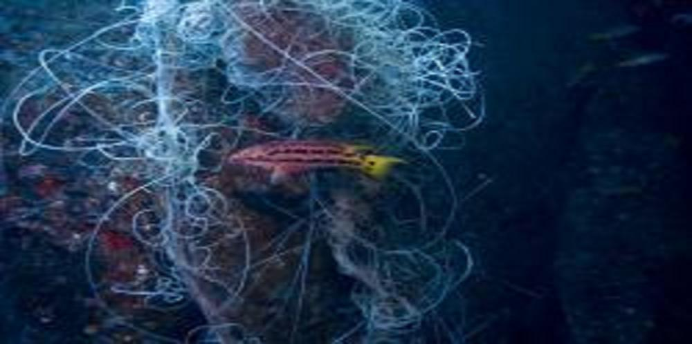 Death Toll Mounts in Hawaii's Longline Fisheries