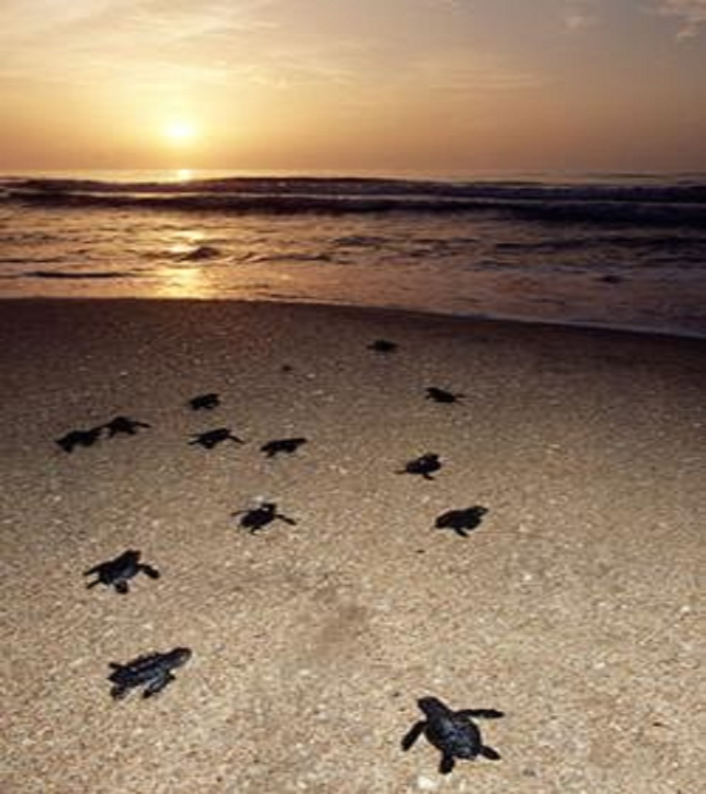 STRP asks Texas Parks and Wildlife Commission for more sea turtle protection