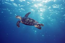 Highlighting Sea Turtles and Safe Seafood at Oceans Day 2009