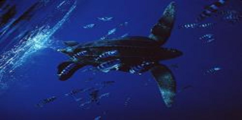 Sea Turtles Spared from Longline Fishery Proposed off the U.S. West Coast!