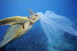 We Must Stem the Tide of Plastic