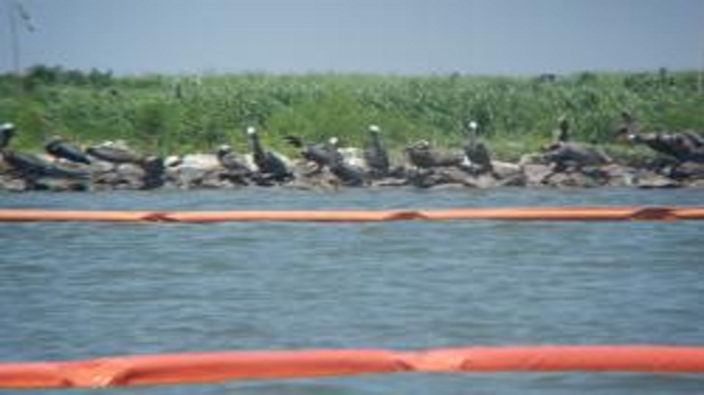 BP Oil Spill Operations Violating Endangered Species Act