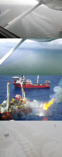 Sea Turtle Search Over Gulf Oil Spill