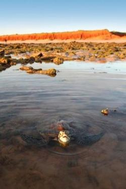 Kimberley Sailing Regatta to Help Save Sea Turtles