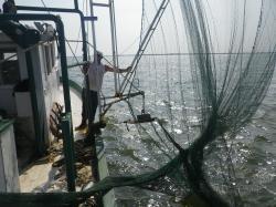 Bycatch Blues in Louisiana