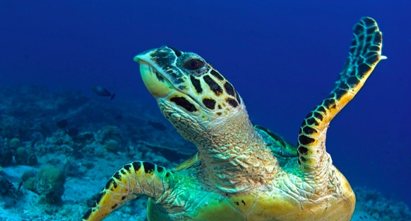 Sea turtle expert to challenge fishing gear fixes at Fisheries Forum