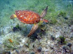 Sea turtle guru tells all in Outside