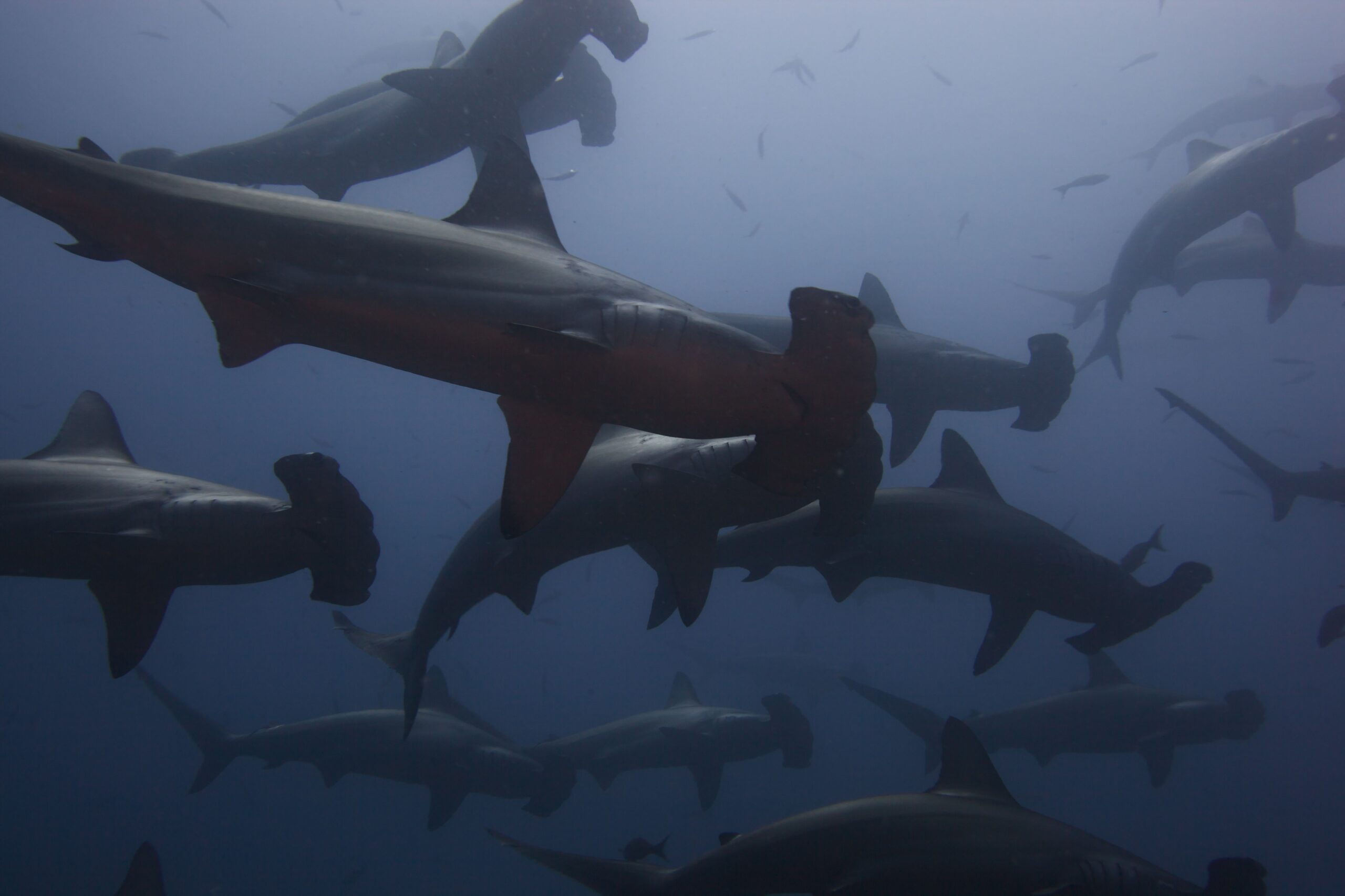 Cocos Island April 2012 Expedition Report