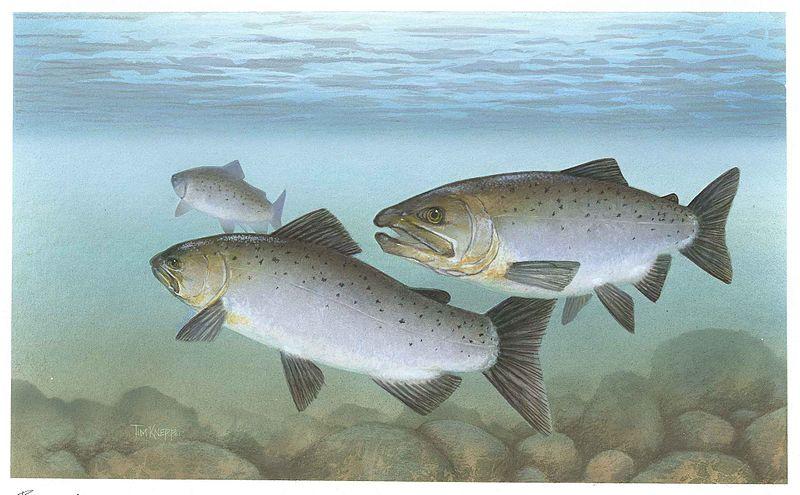 California Sport Fish Survey: Mercury, PCBs Higher