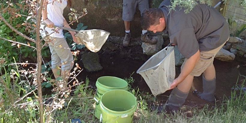 NBC News Coverage of Fish Rescue in Barranca Creek