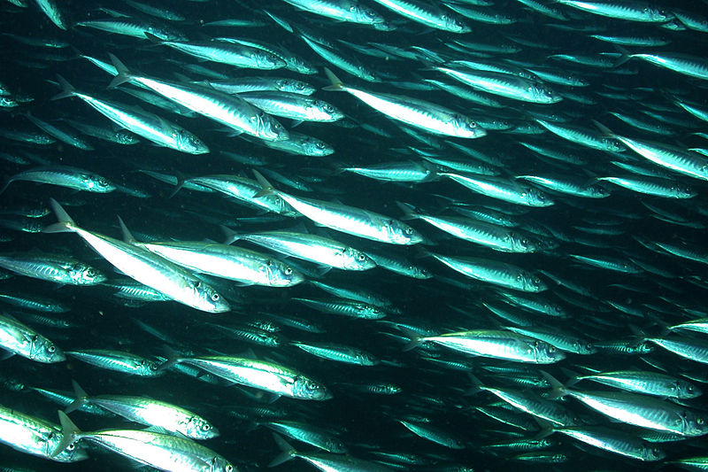 Got Mercury Files Lawsuit with the FDA to Protect Americans From Mercury in Fish