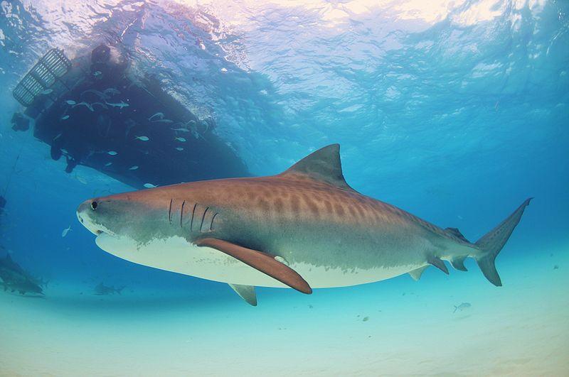 Historic Illinois Legislation Protects Sharks