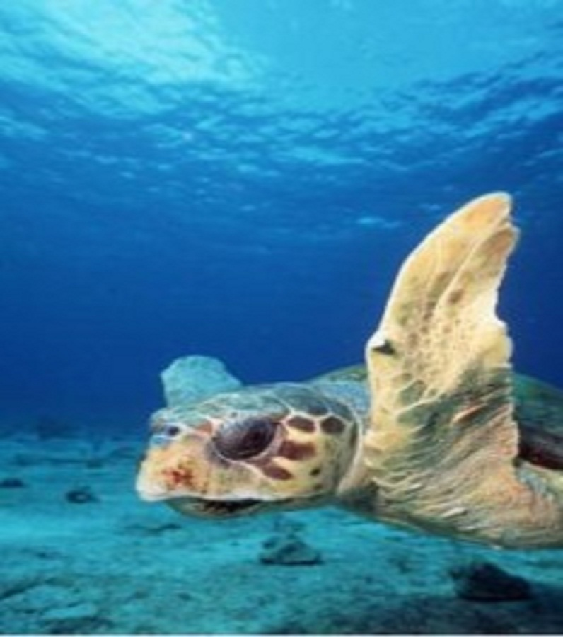 New Lawsuit Launched to Protect Endangered Sea Turtles