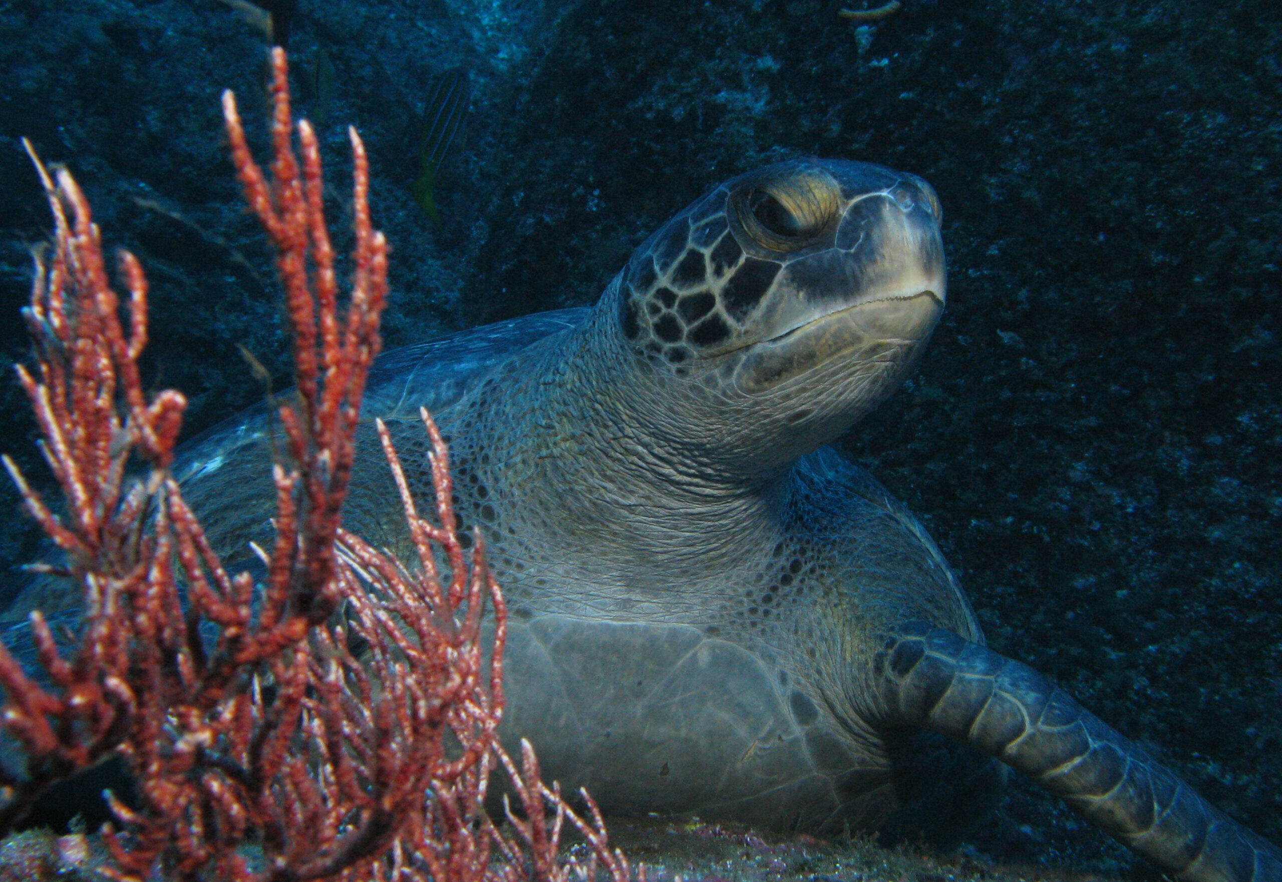 Cocos Island September/ October 2012 Expedition Report
