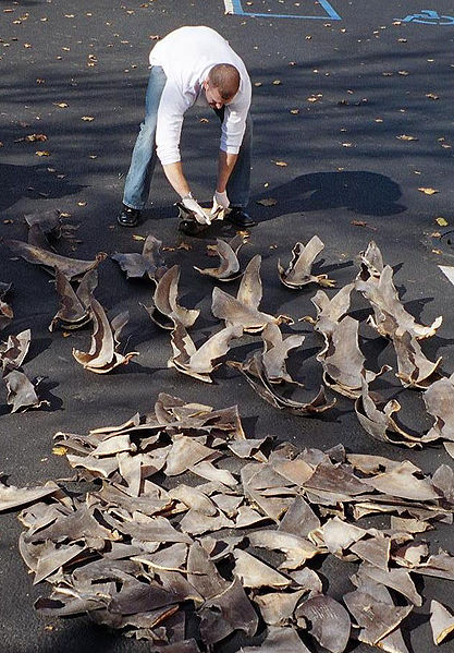 Why a New Law Aims to Ban Shark Fins in Texas