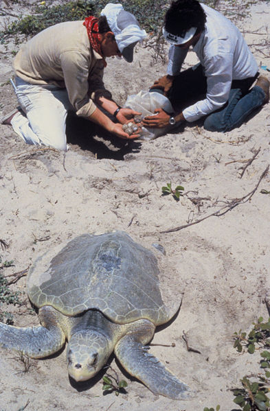 More than 130,000 People Call for Justice after the Murder of Costa Rican Sea Turtle Defender