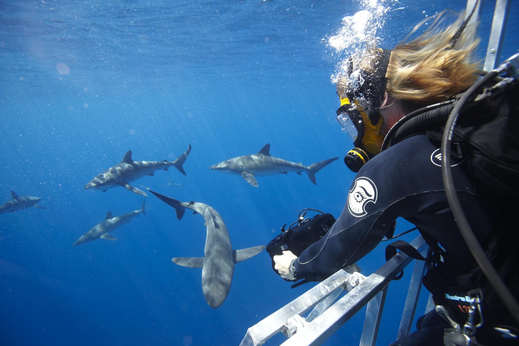 Turtle Island Restoration Network Cocos Island Dive Expedition