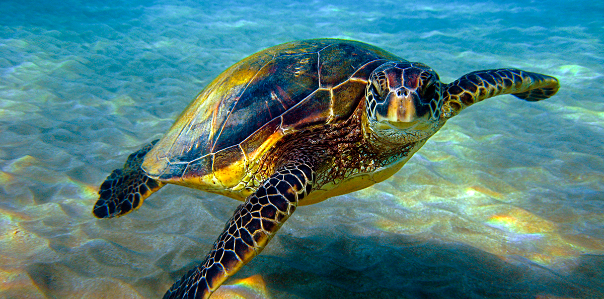 Fracking, Gas and Coal Projects to Push Great Barrier Reef's Sea Turtles Closer to the Brink of Extinction