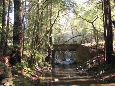 lag-creek-web