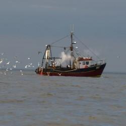 Shrimp Trawler/ Ian Simons