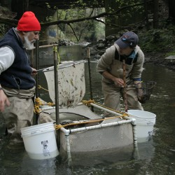 SPAWN Monitoring Fish in Lagunitas Creek