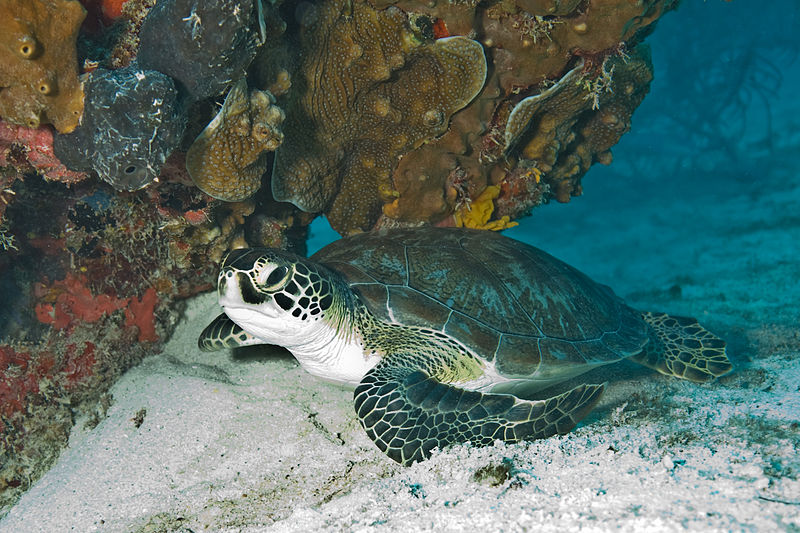 Threats to GBR Turtles