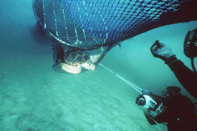 Lawsuit Launched to Protect Sea Turtles From Drowning in Shrimp Fishing Nets