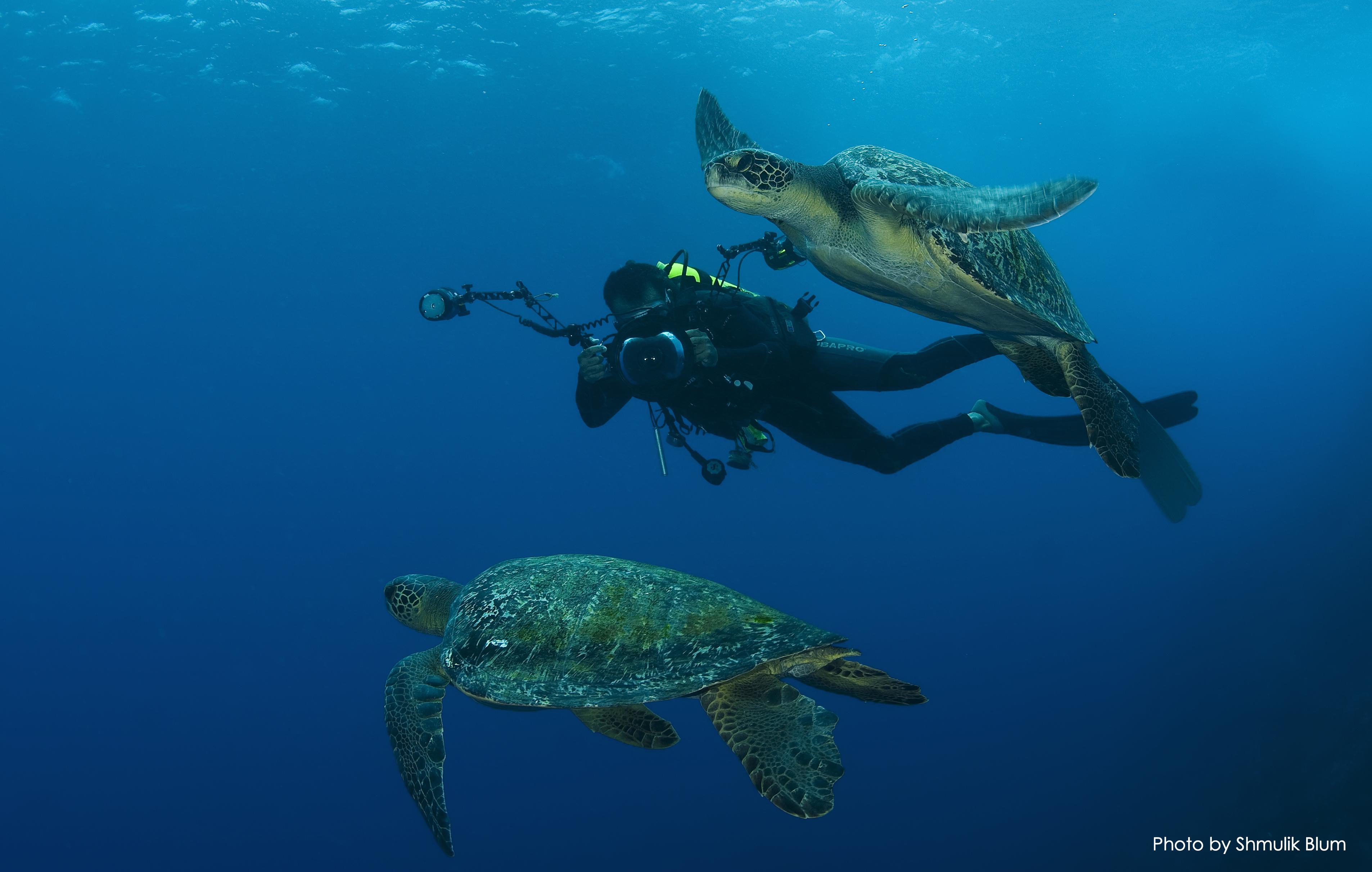 Sea Turtles Photo by Shmulik Blum