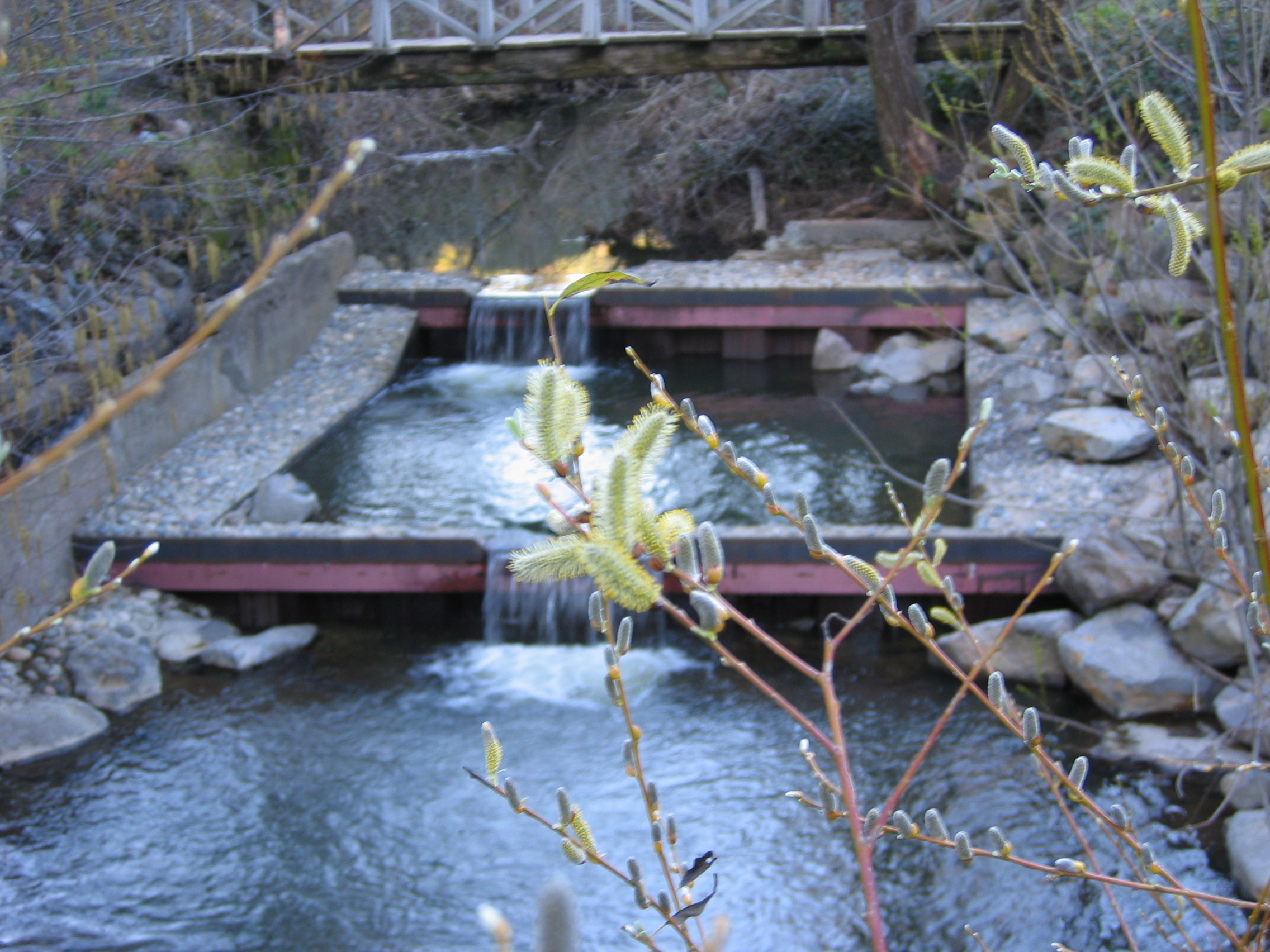 State Funds Salmon Restoration