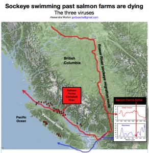 BLOG: Salmon Feedlots in British Columbia Wreck Havoc on Wild Salmon ...