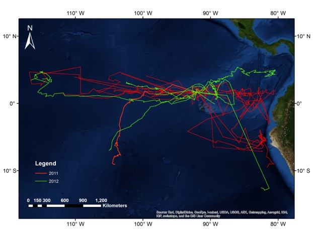 Tagged whale shark movement in the Eastern Tropical Pacific