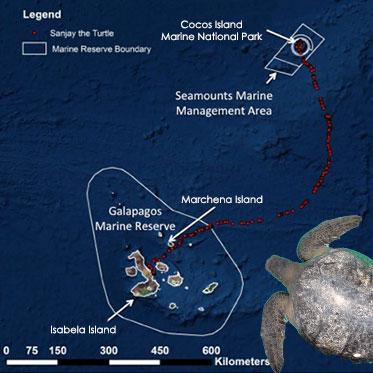 Una tortuga marina verde completa la histórica travesía de Cocos a Galápagos