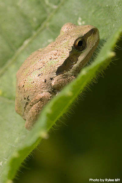 Building Homes for Reptiles and Amphibians