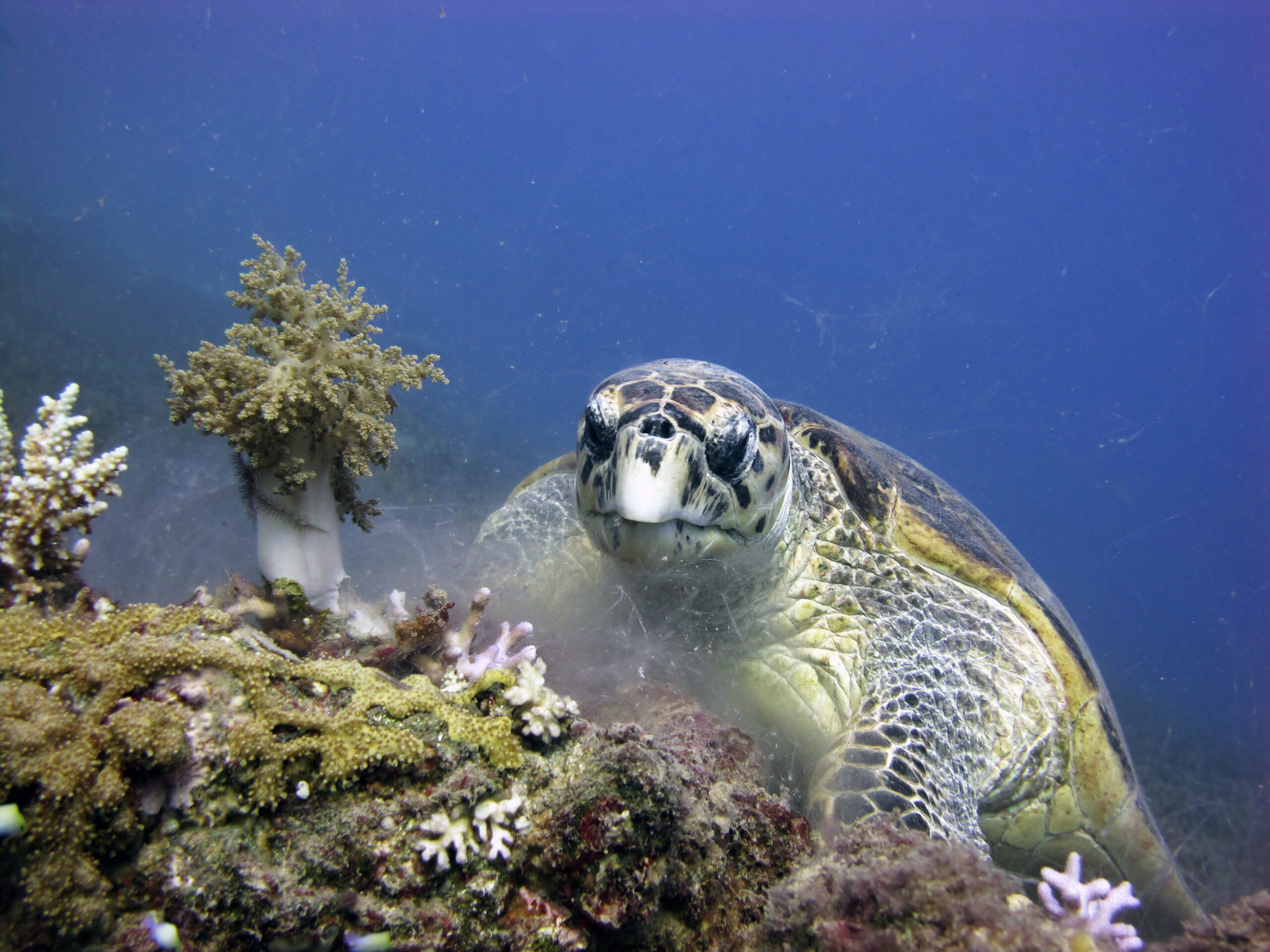 Horn, Petit Bois islands off Mississippi Coast Included In Critical Turtle Habitat