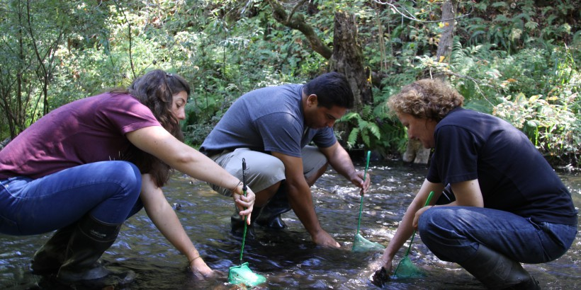 Benthic Macro Invertebrate Collection