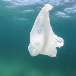 Plastic-bag-sea-bed-web