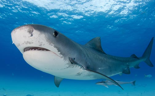 Shark Scientists Focus on Finding Out Where Threatened Sharks Swim at International Bogotá Conference