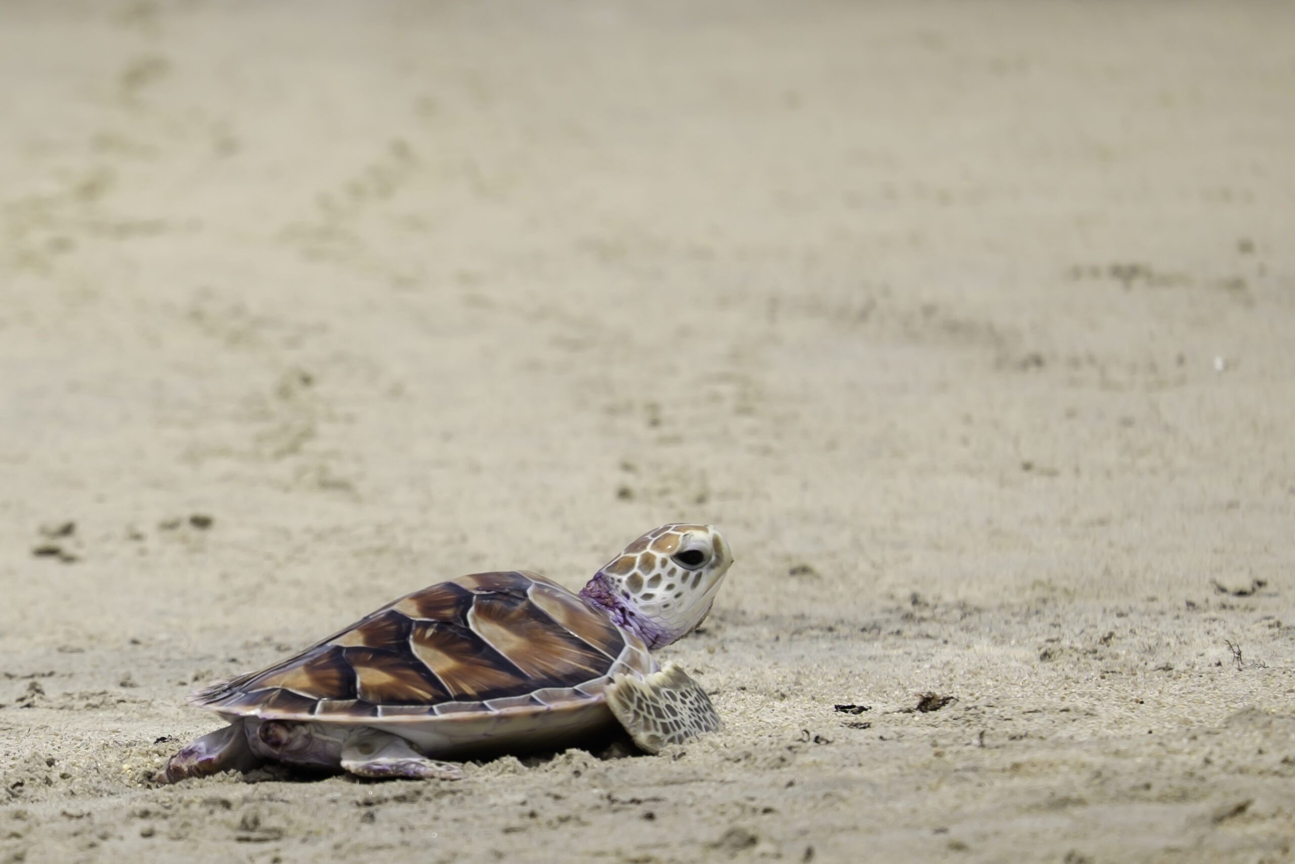 Film, Sea turtles, Day of Dead Converge